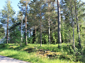 Vihti Otalampi Tammijoentie 21, Tontit, Vihti, Tori.fi