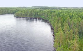 4000m², Koivulantie 7 C, Liperi, Tontit, Liperi, Tori.fi