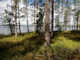9500m², Koivulantie 7 E, Liperi, Tontit, Liperi, Tori.fi