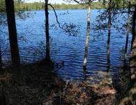 6.2 ha, Kuusniementie 135, Tampere