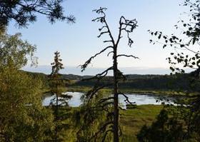 2490m², Kyynärkuja, Lohja, Tontit, Lohja, Tori.fi