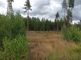 10000m², Vanha Hämeentie 549, Tuusula, Tontit, Tuusula, Tori.fi