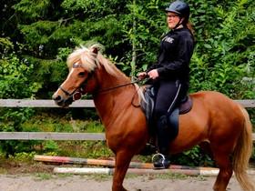 Etsin vuokraheppaa, Hevoset ja ponit, Hevoset ja hevosurheilu, Hattula, Tori.fi