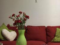 Kotisiivous nopea,tehokas, ikkunapesu, maalaus