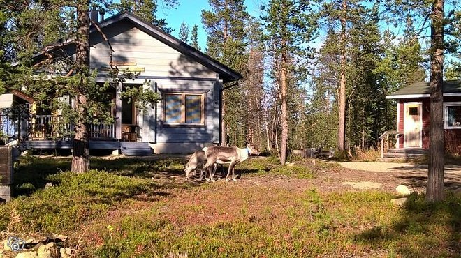 Hirsinen talvi-asuttava loma-asunto Ivalossa