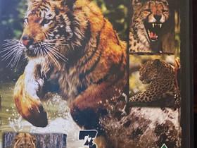 Big Cats in the wild- 3 dvd, Elokuvat, Turku, Tori.fi