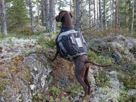 Koiranreppu Non-stop Amundsen L-koko, Palvelut, Kuhmoinen, Tori.fi