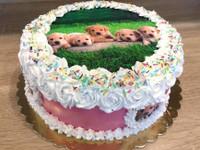 Syötävä kakkukoriste koirasta - omasta kuvasta