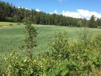 Maata ja metsää Rymättylästä