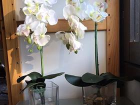 Silkkikukka orkidea lasiruukussa, Kasvit ja siemenet, Piha ja puutarha, Espoo, Tori.fi