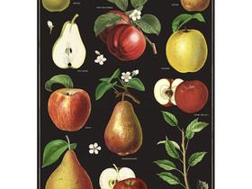 Päärynä/omena juliste, Muu sisustus, Sisustus ja huonekalut, Porvoo, Tori.fi
