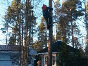 Pihapuiden / ongelmapuiden kaatoa, Palvelut, Ilmajoki, Tori.fi