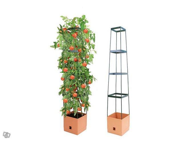 Tomaattitorni Bio Green Maxitom
