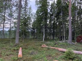 Halkoja Oulu