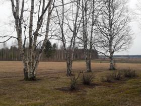 O: pihapuita hakevärkiksi, Muu piha ja puutarha, Piha ja puutarha, Ilmajoki, Tori.fi